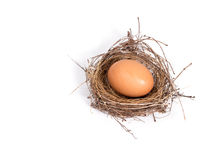Brown eggs in a nest isolated on a white background. Stock Photography