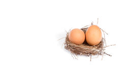 Brown eggs in a nest isolated on a white background Stock Photos