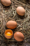 Brown eggs in a nest Stock Images
