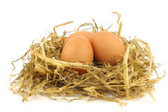 Brown eggs in a nest of straw. On a white background Stock Photos