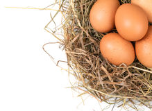 Brown eggs in a nest on a white. Brown eggs in a nest isolated on a white background stock photos