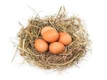 Brown eggs in a nest on a white Stock Images