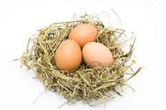 Brown eggs in a nest  Stock Image
