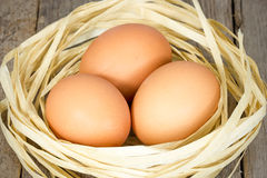 Brown eggs in the nest Royalty Free Stock Images