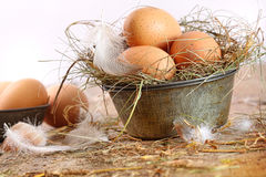 Brown eggs in old tin plate with feathers Stock Photography