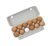 Brown eggs with one white egg Stock Images