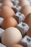 Brown eggs in a paper carton. Brown pasture-raised chicken eggs in a paper carton Stock Photos