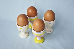 Brown eggs in pastel colored eggs cups Royalty Free Stock Photos
