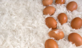 Brown eggs on pile of white feathers Stock Image