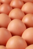 Brown eggs in a row Royalty Free Stock Photo