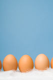 Brown eggs in a row with blue background. Brown eggs laying on white feathers with blue background Stock Photography