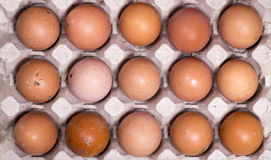 Brown eggs in the tray close-up. Brown eggs in the tray Royalty Free Stock Photo
