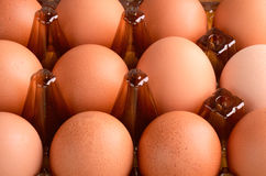 Brown eggs in tray horizontal. On the full backgrpound close-up Royalty Free Stock Photos