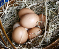 Brown eggs in wooden basket stock images