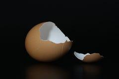 Brown eggshell Fotografia Stock