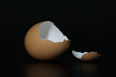 Brown eggshell Stock Photography