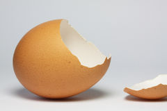 Brown eggshell Royalty Free Stock Images