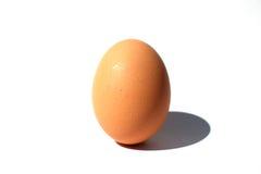 Brown-Ei im Weiß Stockfotografie