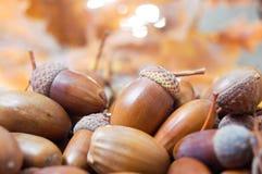 Brown-Eicheln mit Herbstlaub im Hintergrund Lizenzfreie Stockfotografie