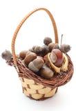 Brown-Eicheln und -kastanie im Weidenkorb auf weißem Hintergrund Lizenzfreies Stockfoto