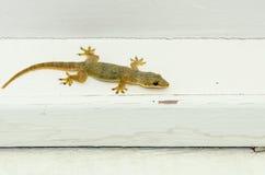 Brown-Eidechsenaufstieg auf weißem Holz Stockbilder