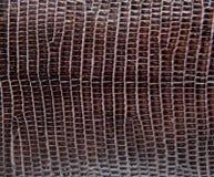 Brown-Eidechsenhaut, abstrat lederne Beschaffenheit für Hintergrund Lizenzfreie Stockfotos