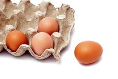 Brown-Eier Stockfoto