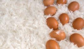 Brown-Eier auf Stapel von weißen Federn Stockbild