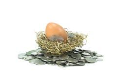 Brown-Eier in einem Nest Lizenzfreies Stockfoto