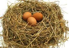 Brown-Eier in einem Nest getrennt Stockfotos