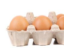Brown-Eier im Eikasten Stockbild