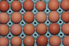 Brown-Eier sind in einem Grünbuchbehälter Stockfotografie