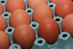 Brown-Eier sind in einem Grünbuchbehälter Stockfoto