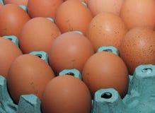 Brown-Eier sind in einem Grünbuchbehälter stockfotos