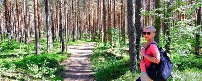 Brown el ?rbol de pino Cora joven Vista de ?rboles viejos altos en el cielo azul imperecedero del bosque primitivo en el fondo fotos de archivo