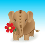 Brown elefant Stock Photo