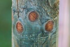 Brown entoure sur la surface d'un identifiez-vous la forêt Photo stock