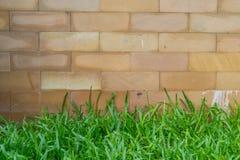 Brown entsteint Ziegelsteinwand und grünes Gras Lizenzfreie Stockbilder