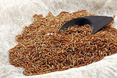 Brown Ermes rice. Brown natural rice on the table Stock Photography