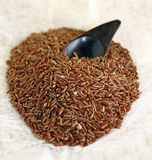 Brown Ermes ryż Zdjęcie Royalty Free