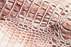 Brown escala o fundo exótico macro, gravado sob a pele de um réptil, crocodilo Close-up do couro genuíno da textura Fotos de Stock