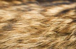 Brown et animal blanc sont tombés texture Images libres de droits