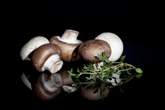 Brown et champignons blancs Image libre de droits