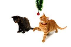 Brown et chatons à tête rouge jouent avec des ornements de Noël Images libres de droits