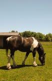 Brown et cheval blanc Photo libre de droits