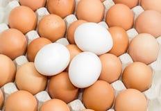 Brown et oeufs blancs dans le carton egg le plan rapproché de plateau Photos libres de droits