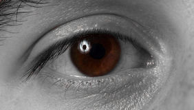 Brown eye Stock Photo