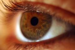 Brown eye. Macro eye Royalty Free Stock Photography