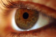 Brown eye. Macro eye royalty free stock photography