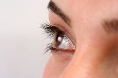 BROWN EYE Royalty Free Stock Image